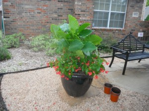 A great way to contain invasive plants is to place them in pots