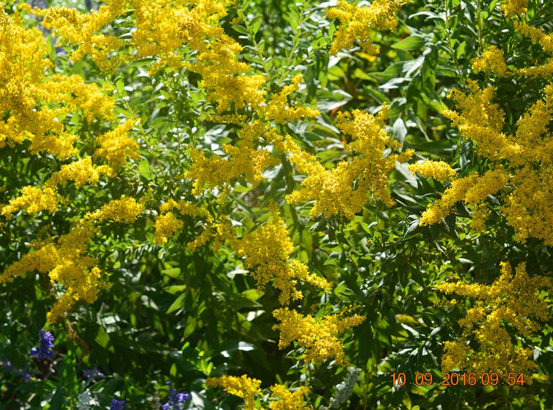 landscaping plants, landscaping flowers, landscaping flowerbeds, landscaping potted plants