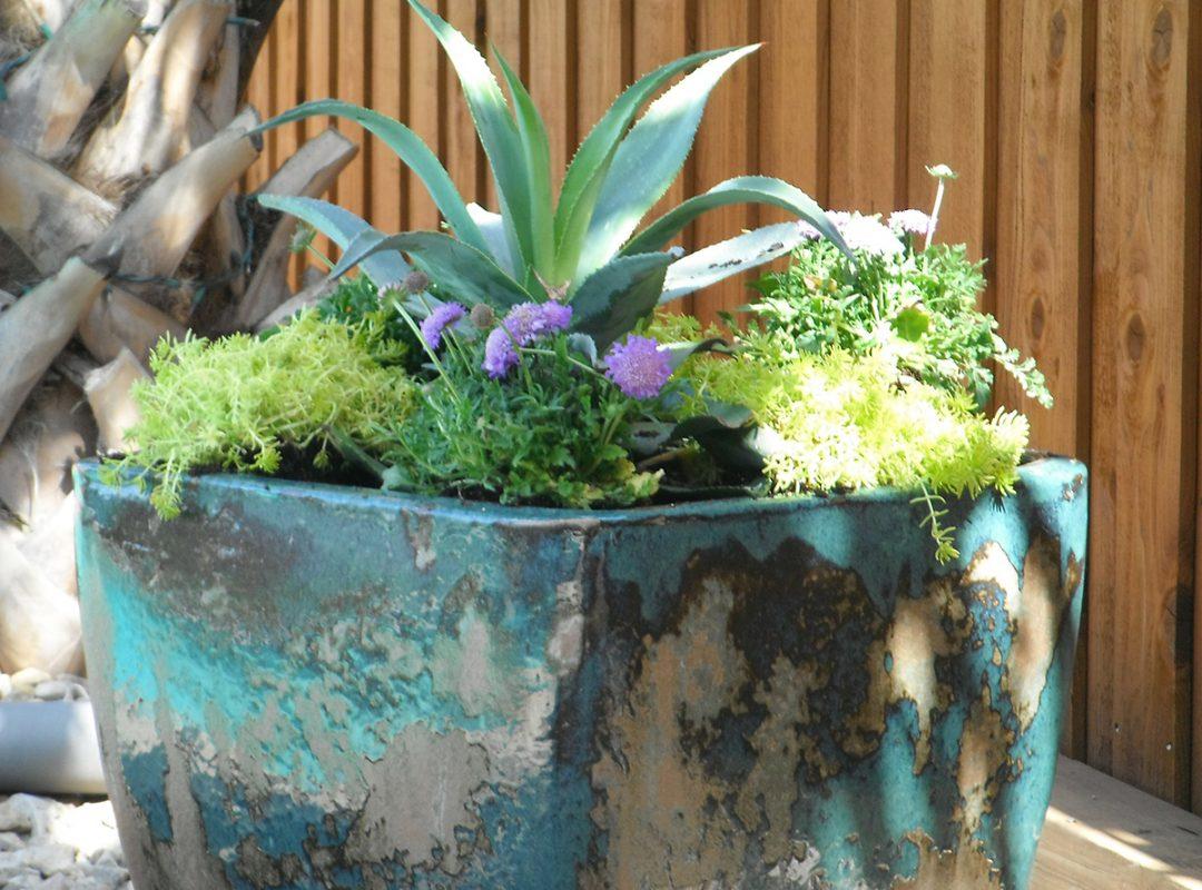 landscaping, pots, potted plant arrangements